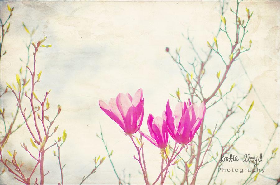 2-21-12---pink-blooms--wm