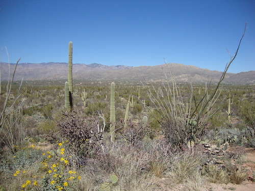 Saguaro National Park East, Loma Verde Loop, Pink Hill Trail Spur