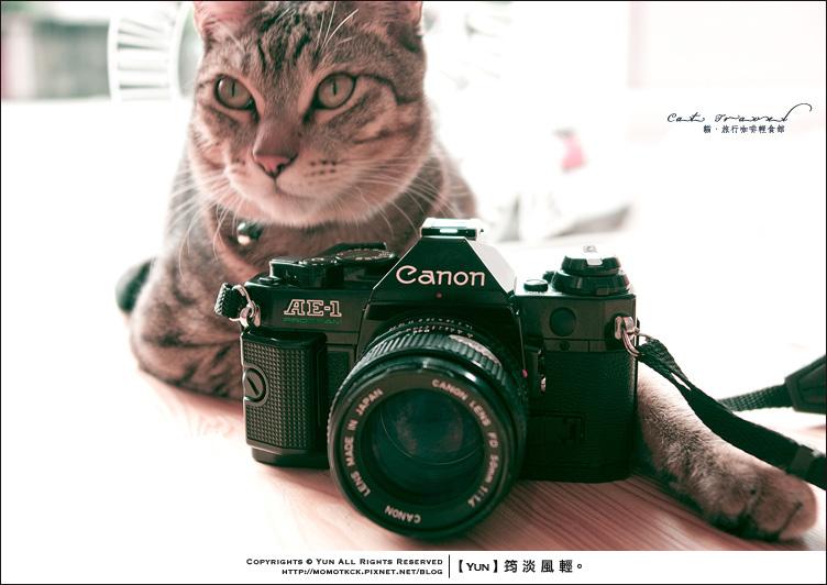 食記︱台中.Cat Travel貓.旅行咖啡輕食館(內含貓咪寫真)
