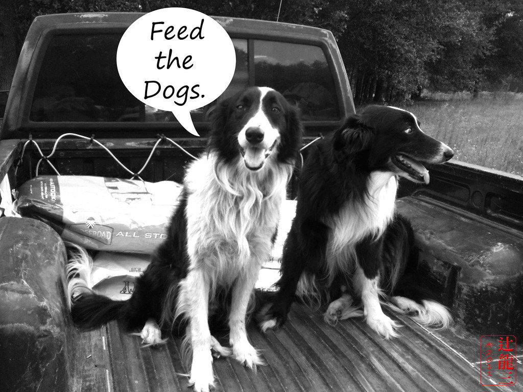 Feed The Dogs