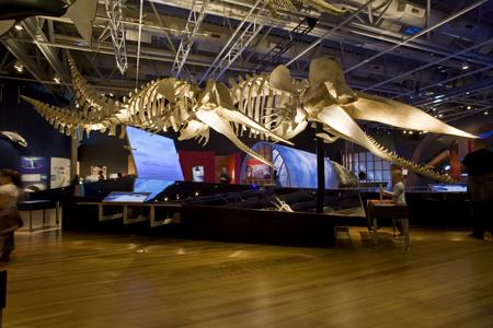 Whales | Tohorä