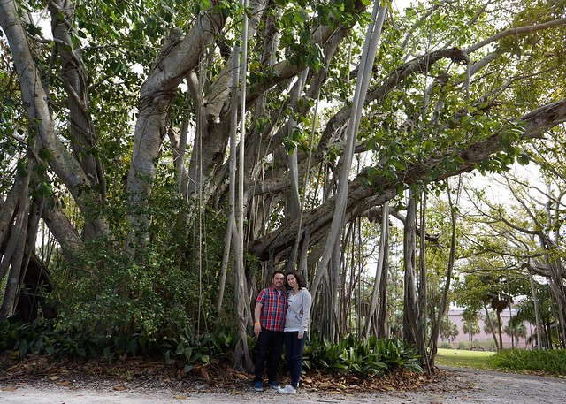 Us and Trees