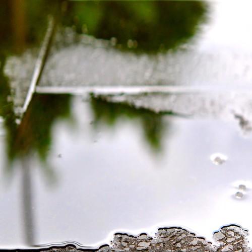 light blur macro rain reflections puddle outside afternoon exterior bokeh brisbane edge paving softfocus steffentuck