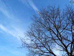 Il cielo sopra la Quercia