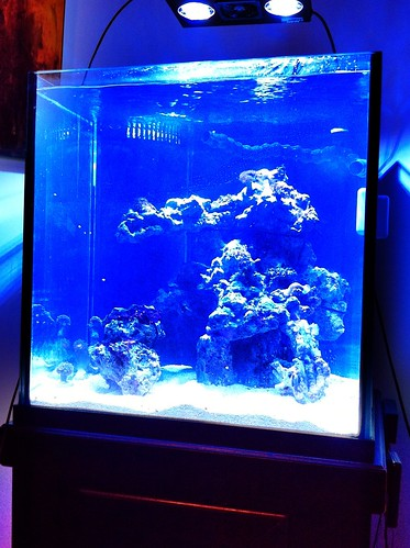 moved to a new 60 cube check the aquascaping and let me know what
