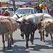 Donkey loads