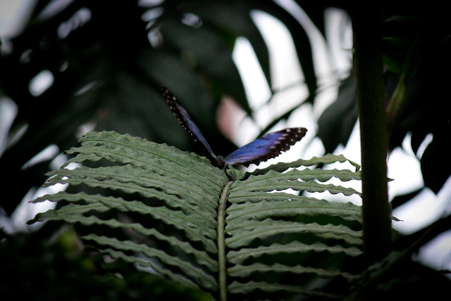 Butterflies at Wisley