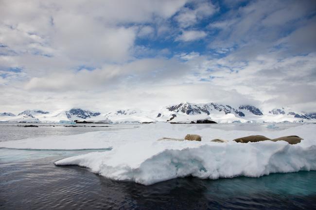 antarctica-blog-43