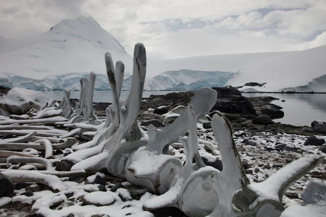 antarctica-blog-84