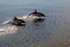 Dolphin, Seals & Wildlife Eco Tour