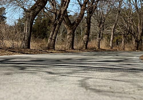 Road Shadows {6/52}