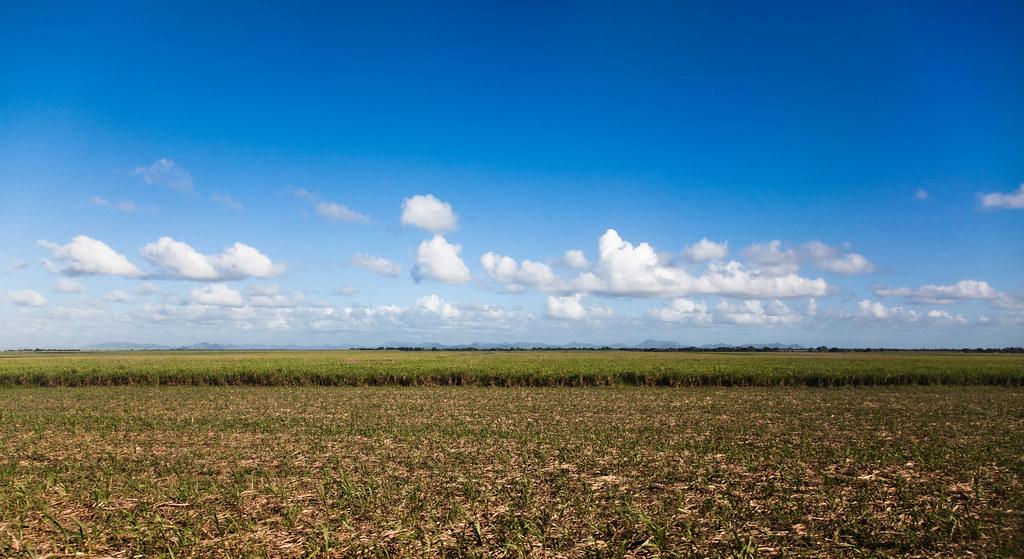 Sugarcane [EOS 5DMK2 | EF 24-105L@24mm | 1/1000 | f/6.3 | ISO200]