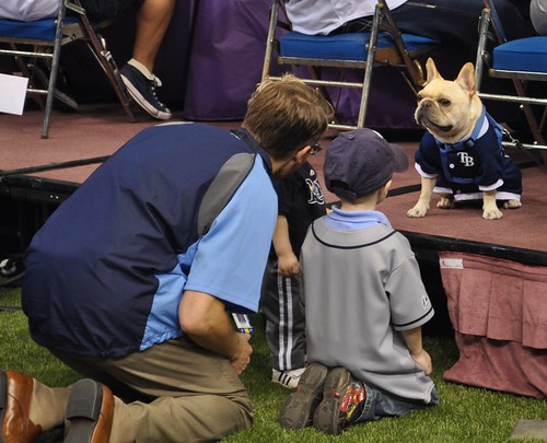 Astro, David Price's French Bulldog, Meets Fans During Rays Fan Fest, Tropicana Field, Feb. 18, 2012