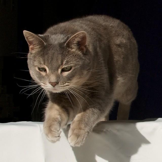 cat jumping machine