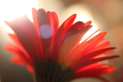 #49/365.2 - flower and light
