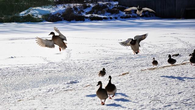 Winter in Waterloo