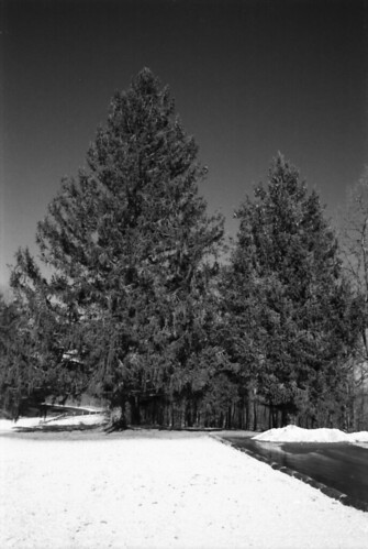 Winter Trees, Thacher Park, Albany. N.Y.