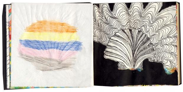 seashellspread2