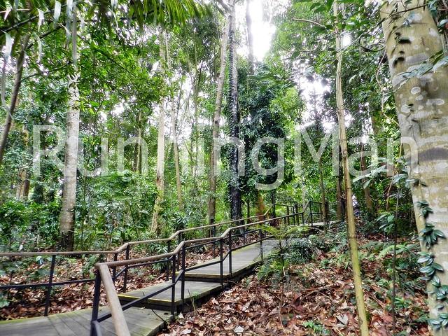 Singapore Botanic Gardens 08