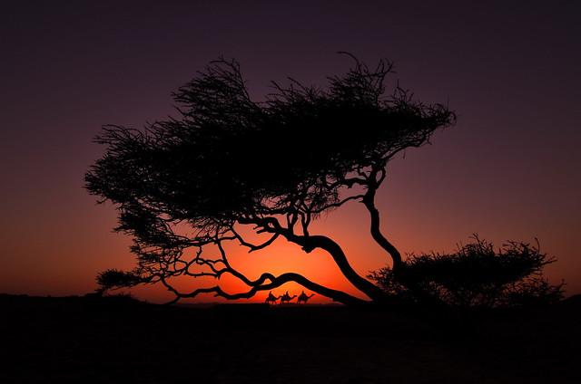 Египет, Сахара