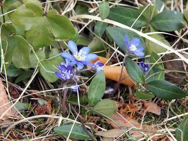P4186419editedflower
