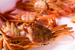crab, animal, crab boil, seafood boil, crustacean, seafood, invertebrate, food,