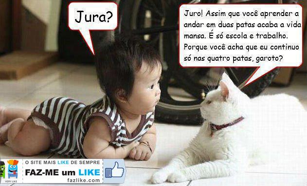 conversa entre bebé e gato