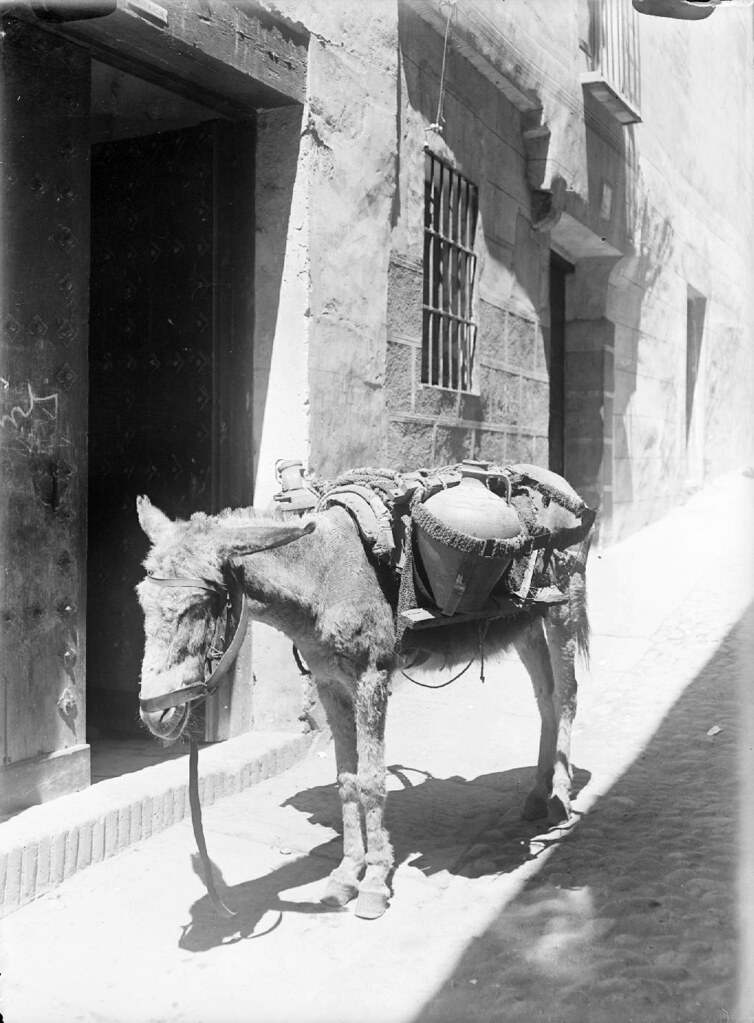 Un burro de un aguador en los años 20. Detalle de una Fotografía de Otto Wünderlich. © Fototeca del Patrimonio Histórico
