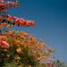 Bougainvilla | Cabo San Lucas | The Design Foundry | Cabo San Lucas | The Design Foundry