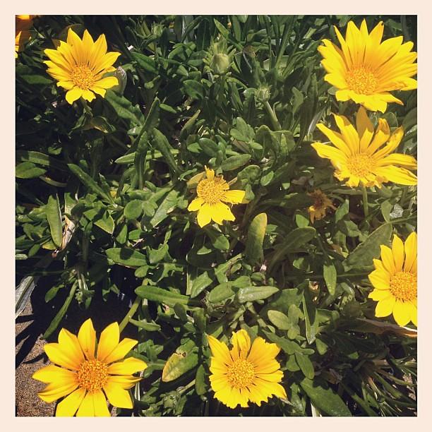 Flowers praise the sun.