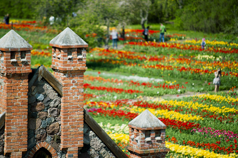 Tulpės | Burbiškio dvaras