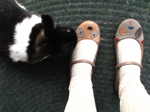 Oreo loves my shoes!