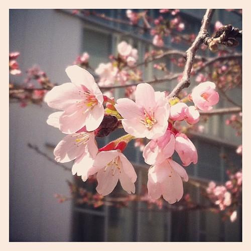 春だねヽ( ´¬`)ノ #instagram