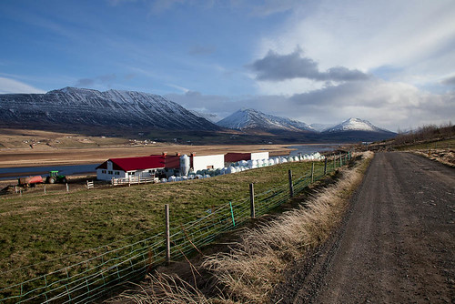 A beautiful afternoon in the country by Guðný Pálína