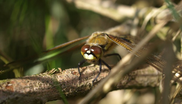 my first dragonfly in 2012
