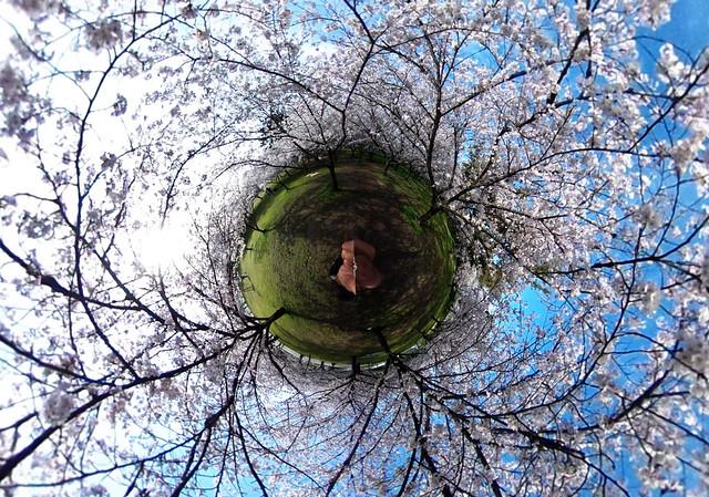 the sakura planet