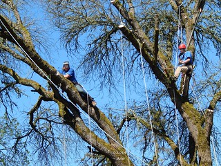 Beautiful Day ~ Matt & Thomas Working in the Huge Tree ~ the Limb Will Fall