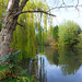 Small photo of Mill Pond, Alsager