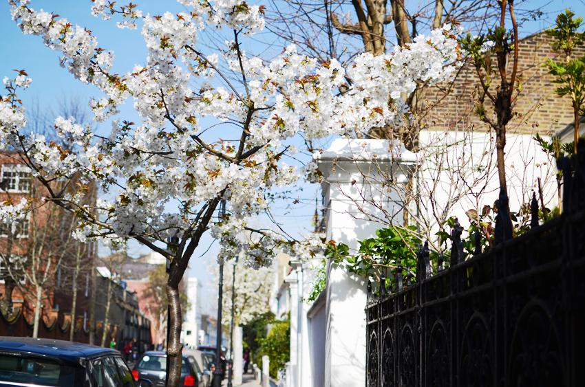 portobello market blossoms