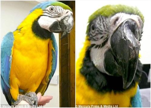 Beak Shaped Nose Beak Knocked Out of Shape