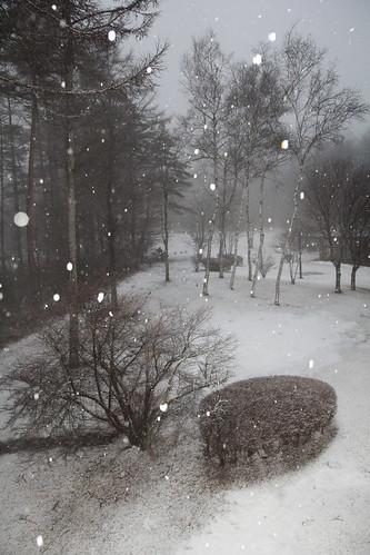 Snow in the forest (Yamanaka-ko, Yamanashi, Japan)