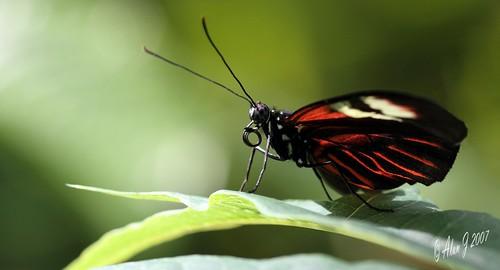 canon butterfly florida 7d mygearandme 100mmmacrof28lisusm