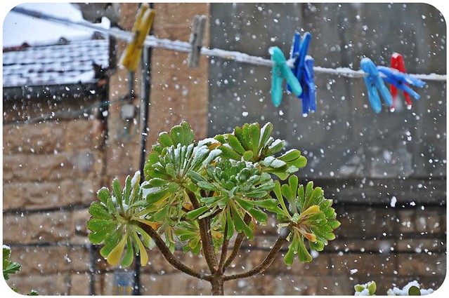 Jerusalem snow 2012