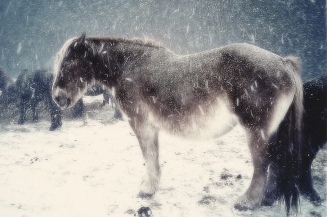 Blizzard Horse