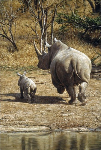 "'Rhino Mother and Baby' oil on board 18"" x 12"