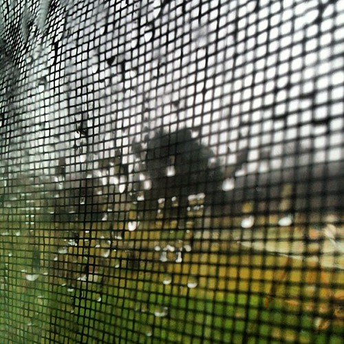 "#marchphotoaday day 8 ""window"""