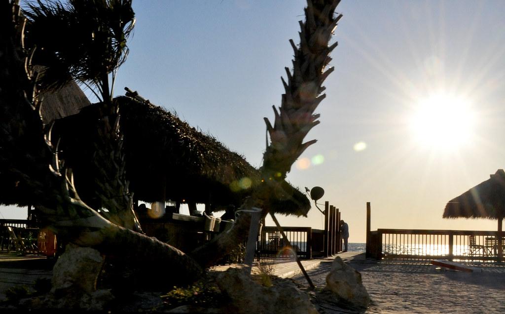 sunset-palmeras