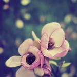 Sweet Perfume