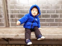 ベンチに座るとらちゃん(2012/3/18) - カメラプラスによる加工