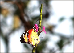 travel tips, Butterfly Garden, Ovalekar Wadi